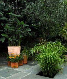 A legtöbb szobanövény nehezen bírja a lakás mostoha körülményeit és nevelésük is igen körülményes. A vízipálma esetében nem így van, egy igazi strapabíró növény, melynek nevelése nem igényel mély szaktudást, néhány szabály