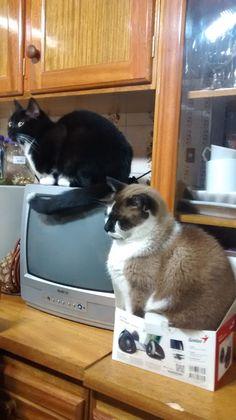 gato de caixa