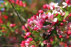 """Spring Glory"""