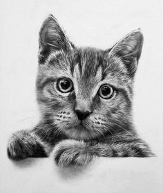 realistic drawing of cat - Google Search