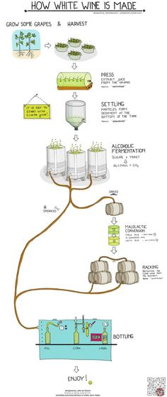 29. How to Make #White Wine - Cheers! This is #Everything You Ever Wanted to Know #about Wine ... → Food #Dessert