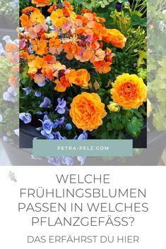 """Welche Pflanzgefäße du für deine Frühlingsbepflanzung verwendest, hängt von verschiedenen Faktoren ab. Pflanzgefäße aus Beton sind sicherlich zu schwer, wenn du die Pflanzgefäße transportieren willst. Leichte Kunststofftöpfe in Steinoptik sehen mittlerweile auch sehr ästhetisch aus. Und wenn du es pflegeleicht magst, dann sind Blumenkästen oder Blumenkübel mit einem Wasserspeicher eine gute Wahl. In meinem Blog """"FRÜHLINGSBLUMEN"""" habe ich mehr Ideen für Balkonkästen und Pflanzgefäße. #petrapelz Petra, Blog, Balcony Plants, Indoor House Plants, Water Storage, Daffodils, Cut Flowers, Blogging"""