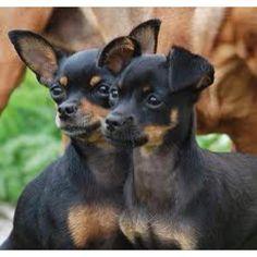 More Teagan puppies.
