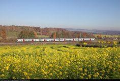 RailPictures.Net Photo: SBB RABe 511 at Lottstetten, Germany by Richard Behrbohm