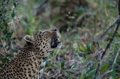 Beautiful African wildlife