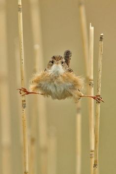 Funny animal pictures with 21 more pics like wren doing the splits. Some funny animal pictures with captions. Pretty Birds, Beautiful Birds, Animals Beautiful, Beautiful Pictures, Animals And Pets, Funny Animals, Cute Animals, Awkward Animals, Photo Animaliere