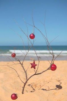 Christmas on the beach My next Christmas tree !