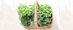 Herbs and other natural remedies to ease or cure their ailments. #teelieturner #herbalmedicine #abesmarket #teelieturnershoppingnetwork  www.teelieturner.com