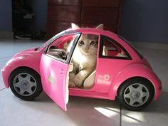 """Yes, I wanted the Barbie Pink VW Beetle when they came out - My kids said """"NO!"""""""