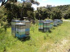 Wairarapa hives