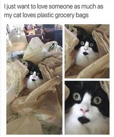 50 Funny Animal Pictures