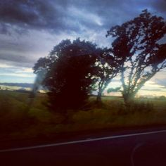 Spooky trees on the way home.