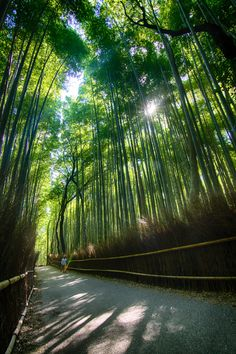 Bamboo forest in Kyoto [OC][3441x5174]
