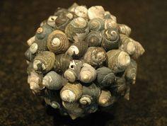 "Dark gray ""pagoda"" (TROCHIDAE: MONODONTINAE) orb -- 11cm"
