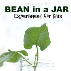 Grow a Magic Beanstalk Oil And Water Experiment, Volcano Experiment, Toddler Science Experiments, Science Experiments Kids, Science For Kids, Autumn Activities For Kids, Educational Activities For Kids, Montessori Activities, Crafts For Kids