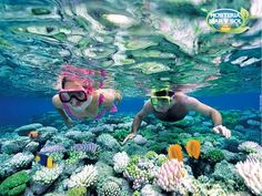 Book your adventure - Spend the day snorkeling Caribbean coral reefs on an excursion to Catalina Island from Punta Cana. Experience a snorkeling wonderland at 'The Wall' drop-off, one of the Dominican Republic's most beautiful dive sites, renowned f Great Barrier Reef, Snorkeling, Laos, 7 Natural Wonders, Cayo Coco, Cuba Beaches, Sandy Beaches, Con Dao, Vietnam Voyage