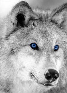 View topic - Werewolves - Chicken Smoothie