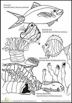 First Grade Animals Life Science Worksheets: Ocean Coloring Page: Fishy Fun Ocean Coloring Pages, Fish Coloring Page, Animal Coloring Pages, Colouring Pages, Coloring Pages For Kids, Kids Watercolor, Watercolor Animals, Art Worksheets, Printable Worksheets