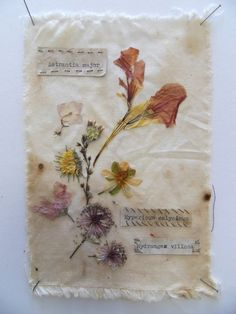 Sarah Walton~Amazing i would love to make a botany book like this one!