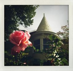Rose and Witch Hat roof