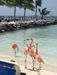 Flamingos on the beach Flamingo Wallpaper, Flamingo Art, Pink Flamingos, Florida Girl, Pink Bird, Summer Aesthetic, Tropical Vibes, Beach Photos, Spirit Animal
