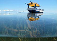 Millions depend on healthy oceans for jobs, livelihoods & food: http://on.undp.org/R9NR8  #WWWeek #COP21