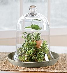 Herb Garden Cloche With Removable Gl Top