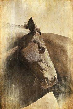 Saatchi Online Artist Alberto Baldelli; Photography, Horses #art