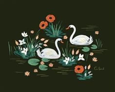 Rifle Paper Co. Swan Art Print designed by Anna Bond