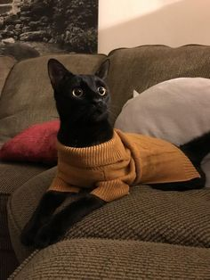 Hello There Bright People Are You Looking Petlover Or Have You Any Pretty Pets I Think You Love A Cute Face So Fo Cute Cats Pretty Cats Beautiful Cats