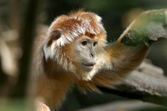 Wild Animals Pets - Ask.com Image Search