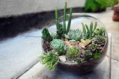 #gardening #terrarium