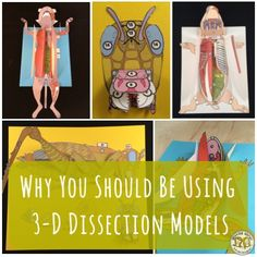 Our Scienstructable science dissection paper models provide an authentic, low-prep & budget-friendly option for life science & biology classrooms. Get a worm, frog, pig & more! Biology Lessons, Science Biology, Science Lessons, Teaching Science, Science Education, Life Science, Science Topics, Ap Biology, Teaching Tips