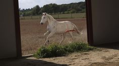Legendary horses to be slaughtered as Spain's financial crisis deepens  Published April 18, 2013