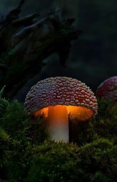*+*Mystickal Faerie Folke*+*... By Artist Unknown... Faeries Garden Light... The Path of the Faerie Procession is Lit...