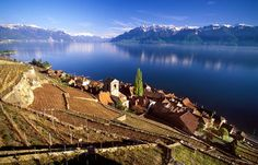 The Lavaux Vineyard Terraces, stretching for about 30 km along the south-facing northern shores of Lake Geneva from the Chateau de Chillon to the eastern outskirts of Lausanne in the Vaud region, cover the lower . Monuments, Flora, Heritage Center, Lake Geneva, List, World Heritage Sites, Places To Travel, Vineyard, Photos