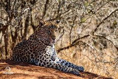 Tailormake your African Safaris and Tours with the Pioneers who created this concept and Live in Africa. Book local and secure local rates. Spotted Cat, Private Games, Cheetahs, Game Reserve, Leopards, African Safari, Black Spot, Stand Tall, Long Legs