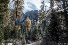 Winter, Journey, Photography, Photos, Winter Time, Photograph, Photography Business, The Journey, Photoshoot