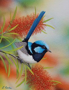 Wren & Bottlebrush by Lyn Cooke Pretty Birds, Beautiful Birds, Animals Beautiful, Cute Animals, Australian Native Flowers, Australian Animals, Watercolor Bird, Watercolor Animals, Exotic Birds
