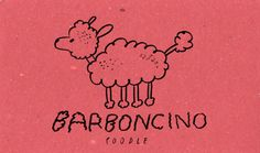 Learning Italian Language ~  Barboncino (Poodle) IFHN