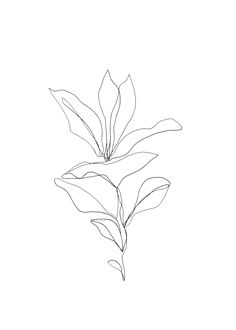 one line plant drawing Tree Line Drawing, Botanical Line Drawing, Plant Drawing, Watercolor Print, Watercolor Flowers, We Bare Bears Wallpapers, Minimalist Drawing, Tropical Art, Floral Wall Art