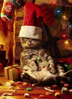 Avanti Christmas Cards, Too Many Treats, 10-Count Avanti Press,http://www.amazon.com/dp/B005XLFOQQ/ref=cm_sw_r_pi_dp_cf.Osb1E1QPMCF0A