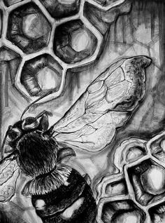 photo up close view Bee Art, Animal Art, Close Up Art, Natural Form Art, Art Drawings Sketches, Nature Art, Insect Art, Art, Environmental Art
