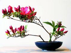 Ikebana : Entre tradition et modernité