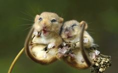 Say cheese! Adorable moment two tiny mice are spotted cuddling ...