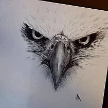 Tattoo ideas for guys bird awesome 59 Ideas for 2019 - - . - Tattoo ideas for guys bird awesome 59 Ideas for 2019 – – D - Eagle Head Tattoo, Eagle Tattoos, Head Tattoos, Feather Tattoos, Foot Tattoos, Sleeve Tattoos, Tattoo Design Drawings, Design Tattoo, Tattoo Designs