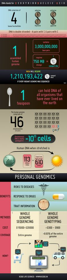 Infographic – DNA, Human genome, Personal genomics
