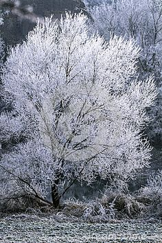 Photo about Winter landscape, tree on snow. Image of scene, december, frozen - 83558013 Winter Trees, Winter Landscape, Scene, Snow, Stock Photos, Seasons, Plants, Outdoor, Outdoors