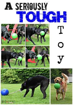 Are you looking for a seriously tough toy for your energetic dog? @MyDogLikes has found it! The @tuggodogtoy is a tug o'war toy designed for 1 or more dogs and is seriously durable!