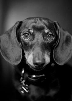 Those lovely eyes are asking you to follow us. @AnimalBehaviorC